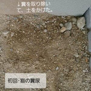 初回猫の糞尿被害の糞を取り除いた