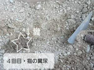 砂をかけられた糞、猫の糞尿被害