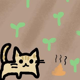 猫が畑に糞